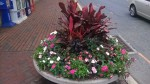 Large urns of flowers beautify the downtown