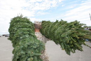 Christmas tree delivery to a military base thanks to Trees for Troops.